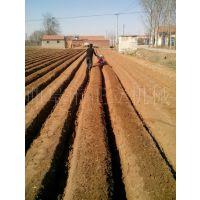 大葱黄姜开沟起垄机 农田果园施肥松土机 农用微耕开沟机价格
