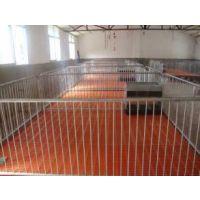 仔猪保育床小猪自由活动区配双筋加厚朔料漏粪板