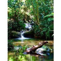 雨林瀑布山泉