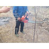 浩发花树苗起树机 链条挖树机型号 70厘米链条果园起树机