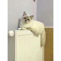 在成都装老房暖气,不将就混日子