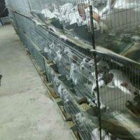 加粗鸽子笼 【兔子笼】飞创丝网全国发货0.6*1.5*2镀锌鸽笼