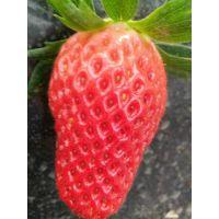 菠萝草莓苗单价多少钱 菠萝草莓苗2018年报价