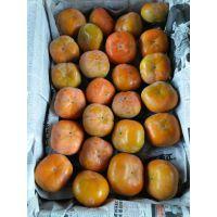 陕西柿子行情,金钱柿子产地价格,八月黄柿子基地价格,水果柿子批发价格