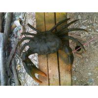 厂家直销 动物雕像 仿真螃蟹 仿真动物 创意工艺品