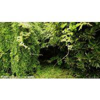 北京专业绿化公司 草坪养护除杂草园林绿化,绿化养护