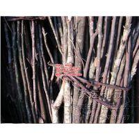 废弃树枝粉碎机|滨州树枝粉碎机|锐达机械(在线咨询)