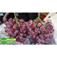 新鲜进口水果秘鲁红提 红地球葡萄供应广州江南水果批发市场