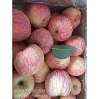 冷库红富士苹果近期价格行情 山东冷库红富士苹果批发价格