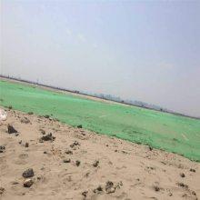 三针盖土网价格 绿色防尘网 蔬菜基地防晒网