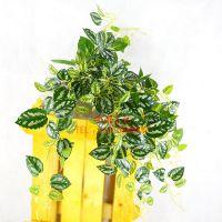 东莞企石浩晟厂家供应环保绿化优质 仿真藤条壁挂 常青蔓藤植物