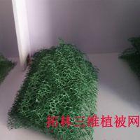 三维立体植被网 绿色2层三维网 三维网护坡