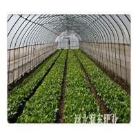 有机肥价格 河北润东肥业 有机肥厂家 发酵有机肥 生物有机肥 批发