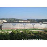 辽宁鞍山有机农业蔬菜温室大棚连栋薄膜、4米高度型施工企业