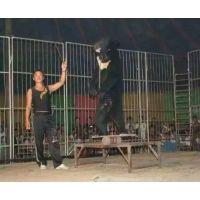 动物出租 马戏团演出 海狮表演 鹦鹉表演租赁