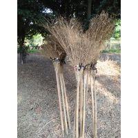金竹牌大竹扫帚,长柄长枝,轻便高效,牢固赖用,超值无比,实惠无比。是你从来没用过的好扫帚。