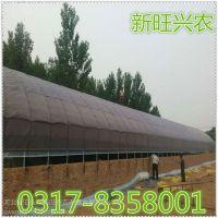 新旺兴农养殖大棚建设厂家