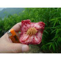 红血桃树苗
