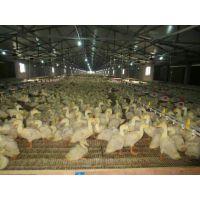养鸡鸭鹅用塑料网床 漏粪地板 养殖场棚用 漏粪板
