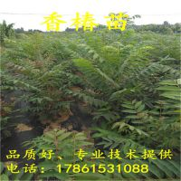 http://himg.china.cn/1/4_228_236206_800_800.jpg