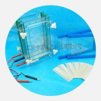 中西单板/双板夹芯式垂直电泳仪(大号) 型号:BL61-DYCZ-28B库号:M407133