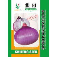 供应河北时丰农业科技开发有限公司时丰牌洋葱种子新品种紫阳F2