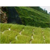 岩石坡面绿化草灌种子混喷云南省承包商