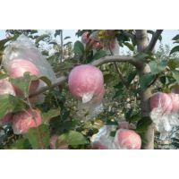 山东红富士苹果供应价格