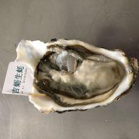 乳山生蚝产地直销 海蛎子批发货源