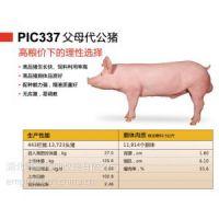 供应(中美合资)鄂美猪种改良公司PIC337猪公