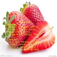 法兰地草莓苗苗茬
