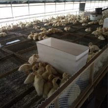 厂家批发鸡鹅鸭用料箱 鸡用料箱 鸭料箱