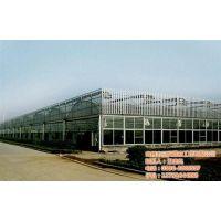 连栋温室供应商|连栋温室|三义温室工程