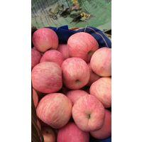 山东红富士苹果产地行情 红富士苹果价格行情