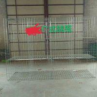 批发广西加粗3层12位4层16位鸽子鸽子笼 肉鸽笼 广式笼