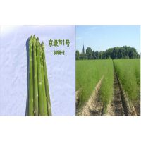 供应京绿芦1号-高产芦笋种子