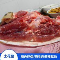 绿色食品 食用野猪肉 宁乡土花猪肉 生态散养 饭店采购