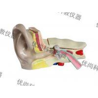 耳解剖模型,初中模型,教学仪器