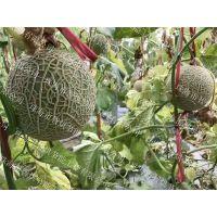 智烘牌果蔬类哈密瓜烘干机网络销售价格,干燥方式稳定的哈密瓜热泵干燥机批发ZH-JN-HGJ03