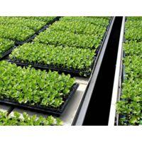 养生蔬菜-花卉种植-潮汐苗床-pvc连接-华耀农业设施
