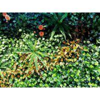 青藤园艺仿真植物墙
