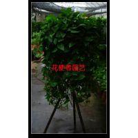 北京绿植租摆公司,办公室绿植出售出租,室内盆景鲜花