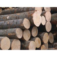 清远木方厂,清远建筑木方供应,清远木材厂,清远进口方条公司