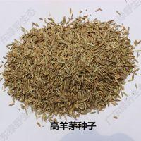 广东绿野生态专业|护坡草种批发|绿化草种|广东草种|草花种子|草籽批发
