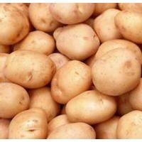 Slendessta 马铃薯提取物