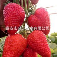 哈尼草莓苗价格 哈尼草莓苗品种介绍 批发供应