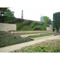 仿真植物墙真植物墙垂直绿化
