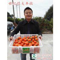 世纪红和东方红品种的差别在哪里 常德树人公司供应世纪红果苗