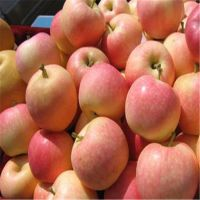 红富士苹果苗时间