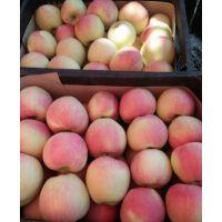 山东红富士纸袋苹果价格